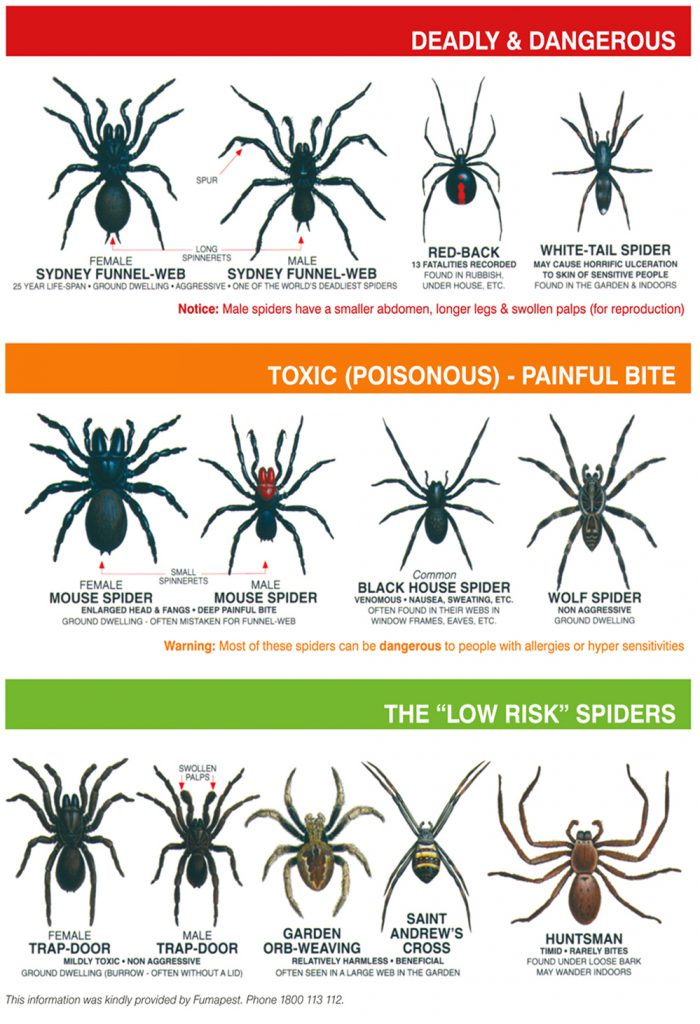 Spiders-Chart